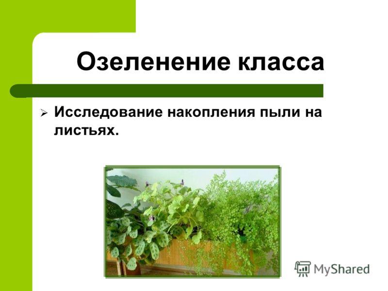 Озеленение класса Исследование накопления пыли на листьях.