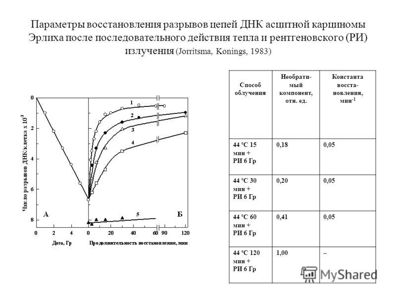Параметры восстановления разрывов цепей ДНК асцитной карциномы Эрлиха после последовательного действия тепла и рентгеновского (РИ) излучения (Jorritsma, Konings, 1983) Способ облучения Необрати- мый компонент, отн. ед. Константа восста- новления, мин