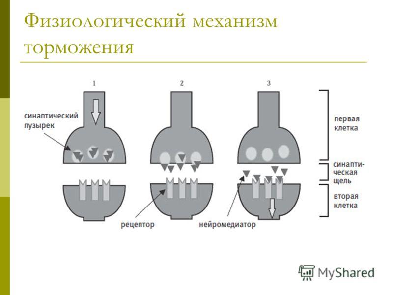 Физиологический механизм торможения
