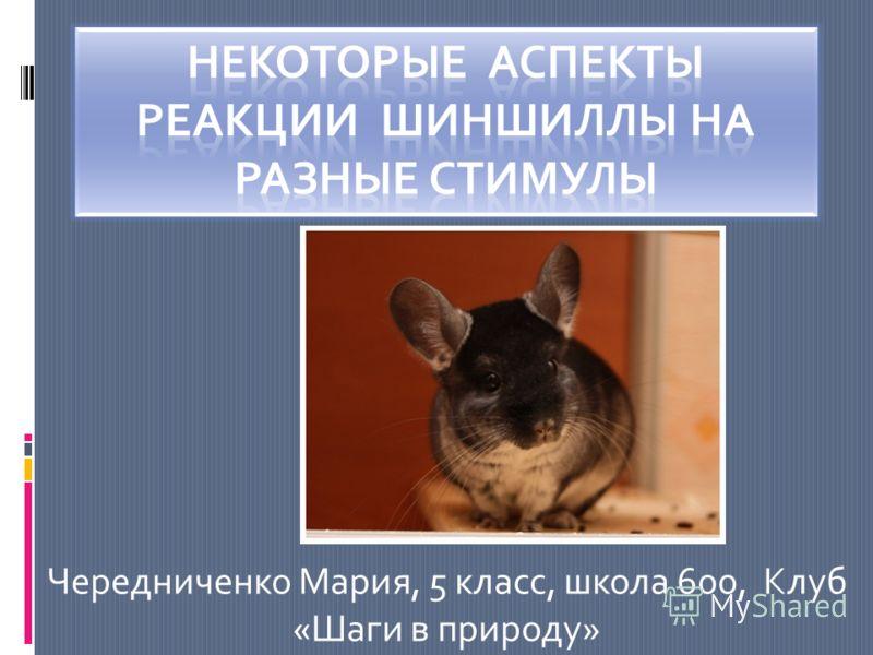 Чередниченко Мария, 5 класс, школа 600, Клуб «Шаги в природу»