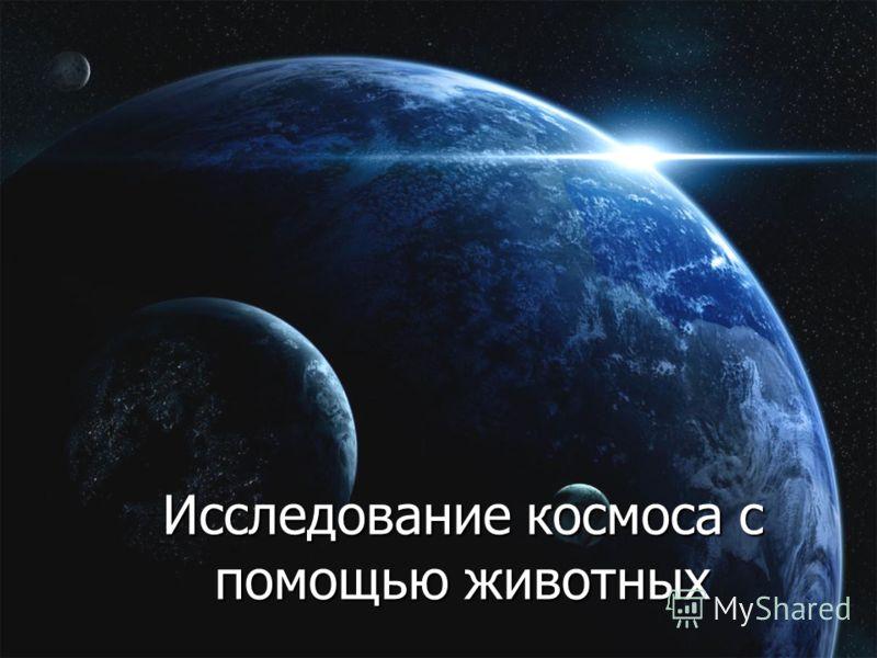 Исследование космоса с помощью животных