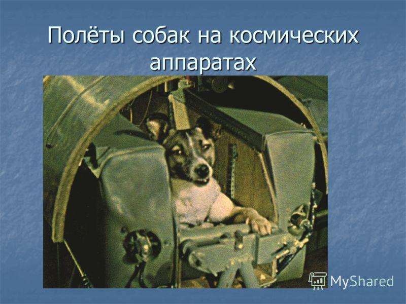 Полёты собак на космических аппаратах