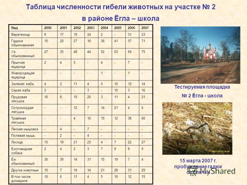 Таблица численности гибели животных на участке 2 в районе Ёгла – школа Вид20002001200220032004200520062007 Веретеница81719242-3123 Гадюка обыкновенная 1520271636415771 Уж обыкновенный 2735484452636975 Прыткая ящерица 245-4-7- Живородящая ящерица ----