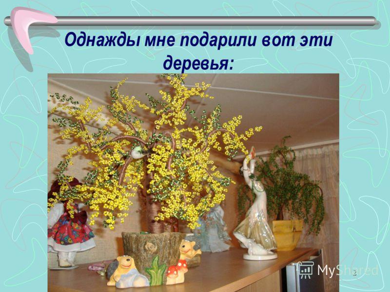 2 Однажды мне подарили вот эти деревья: