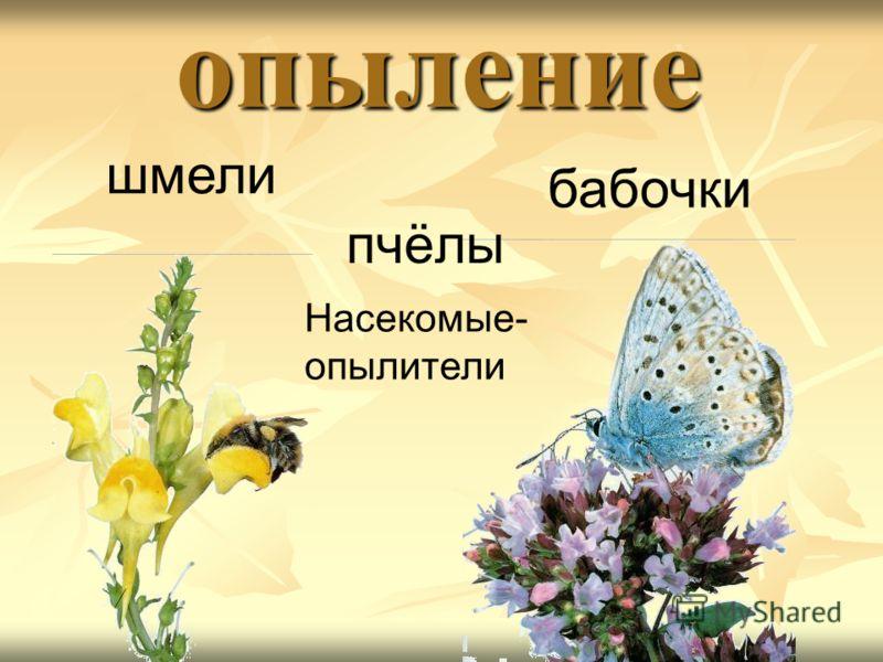 опыление шмели бабочки пчёлы Насекомые- опылители