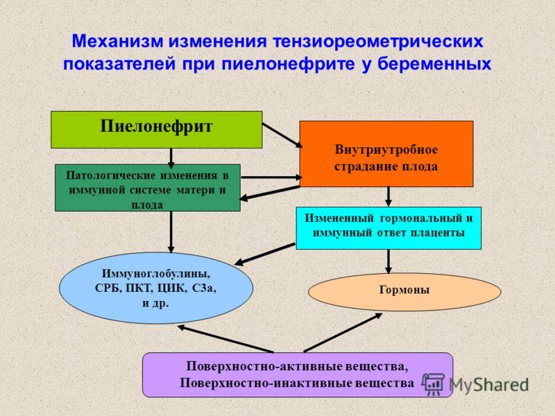 Механизм изменения тензиореометрических показателей при пиелонефрите у беременных Пиелонефрит Внутриутробное страдание плода Патологические изменения в иммунной системе матери и плода Измененный гормональный и иммунный ответ плаценты Иммуноглобулины,