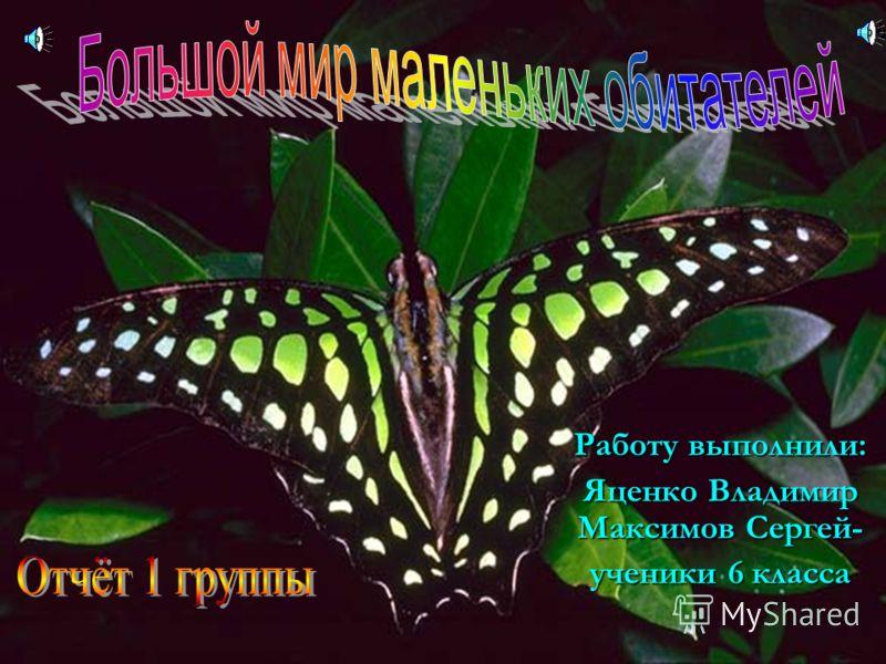 Работу выполнили: Яценко Владимир Максимов Сергей- ученики 6 класса