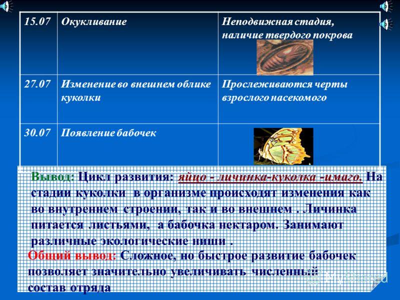 Общий вывод: Сложное, но быстрое развитие бабочек позволяет значительно увеличивать численный состав отряда 15.07ОкукливаниеНеподвижная стадия, наличие твердого покрова 27.07Изменение во внешнем облике куколки Прослеживаются черты взрослого насекомог