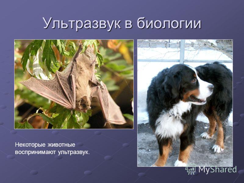 Ультразвук в биологии Некоторые животные воспринимают ультразвук.