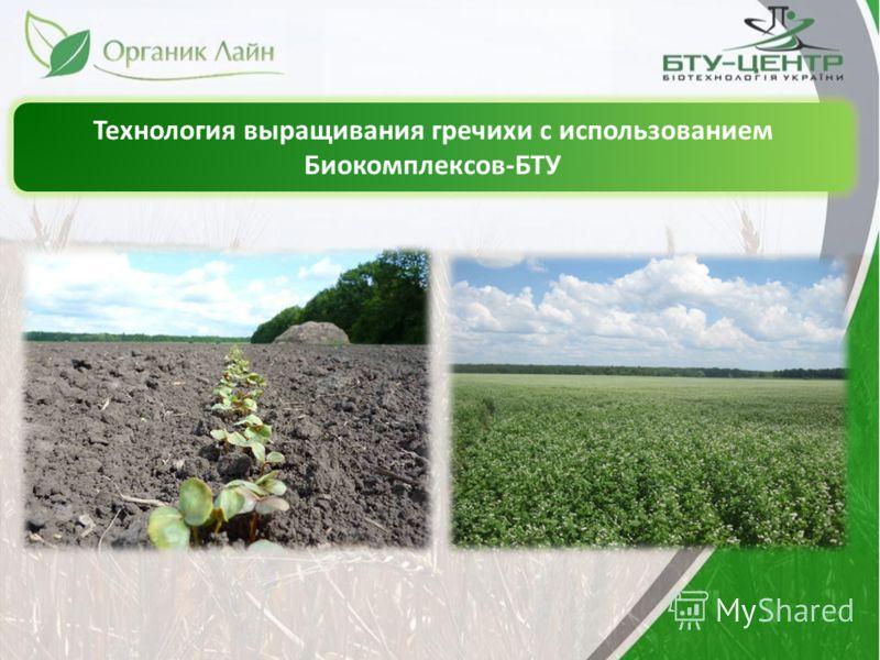 Технология выращивания гречихи с использованием Биокомплексов-БТУ
