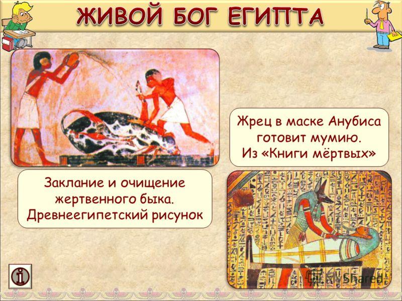 Заклание и очищение жертвенного быка. Древнеегипетский рисунок Жрец в маске Анубиса готовит мумию. Из «Книги мёртвых»