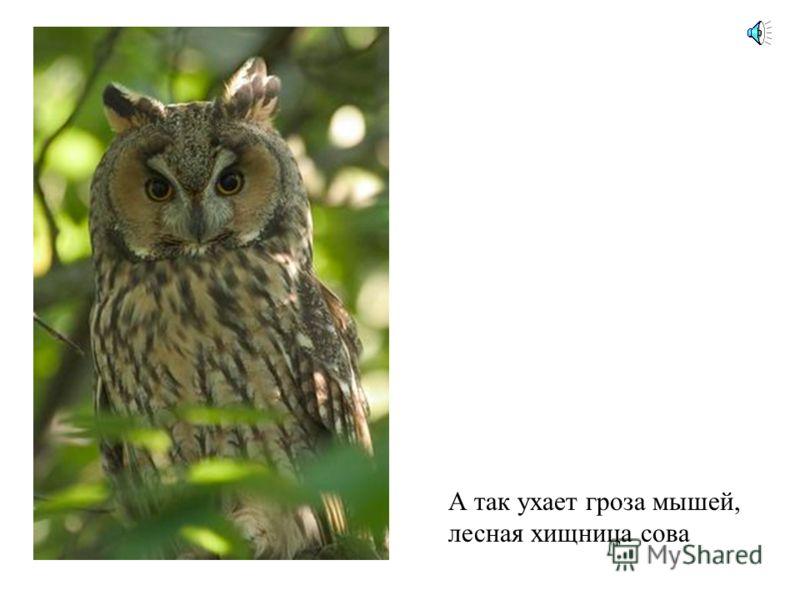 Вот еще один знаменитый птичий певец – скворец. Послушай, какие трели он выводит.
