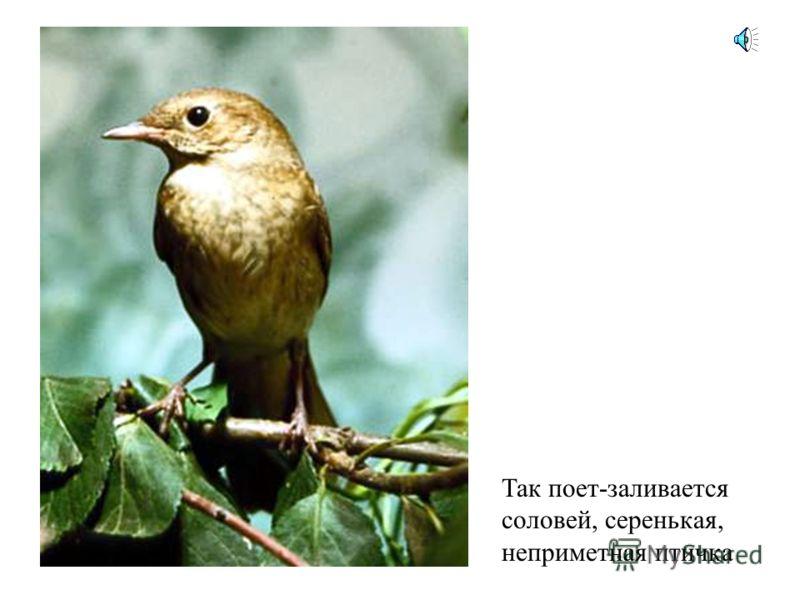 А голос этой птицы узнал? Это каркает ворона