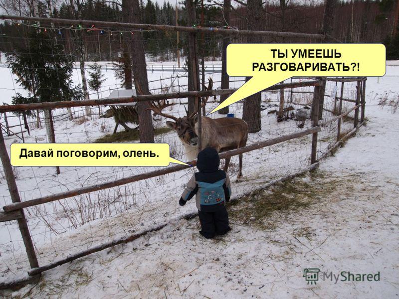 Давай поговорим, олень. ТЫ УМЕЕШЬ РАЗГОВАРИВАТЬ?!