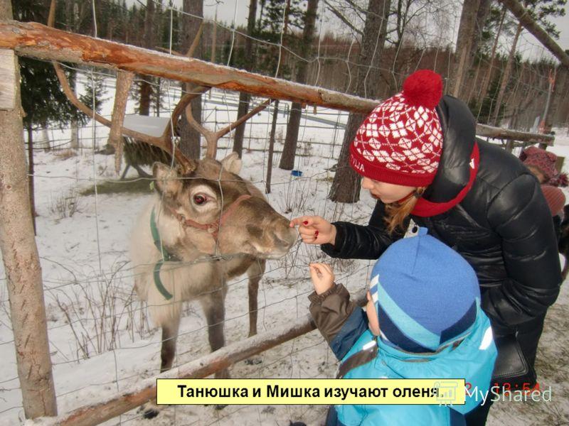 Танюшка и Мишка изучают оленя.