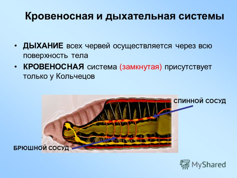 Урок Нервная Система 7 Класс Презентация