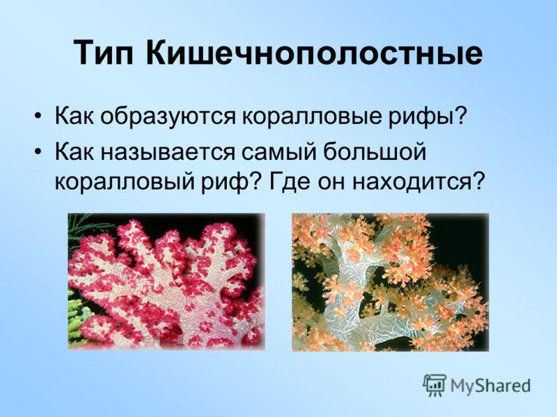 Как образуются коралловые рифы? Как называется самый большой коралловый риф? Где он находится? Тип Кишечнополостные