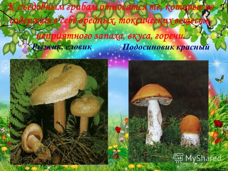К съедобным грибам относятся те, которые не содержат в себе вредных, токсических веществ, неприятного запаха, вкуса, горечи. Рыжик, еловикПодосиновик красный