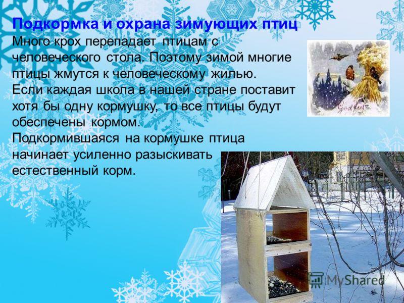 Подкормка и охрана зимующих птиц Много крох перепадает птицам с человеческого стола. Поэтому зимой многие птицы жмутся к человеческому жилью. Если каждая школа в нашей стране поставит хотя бы одну кормушку, то все птицы будут обеспечены кормом. Подко