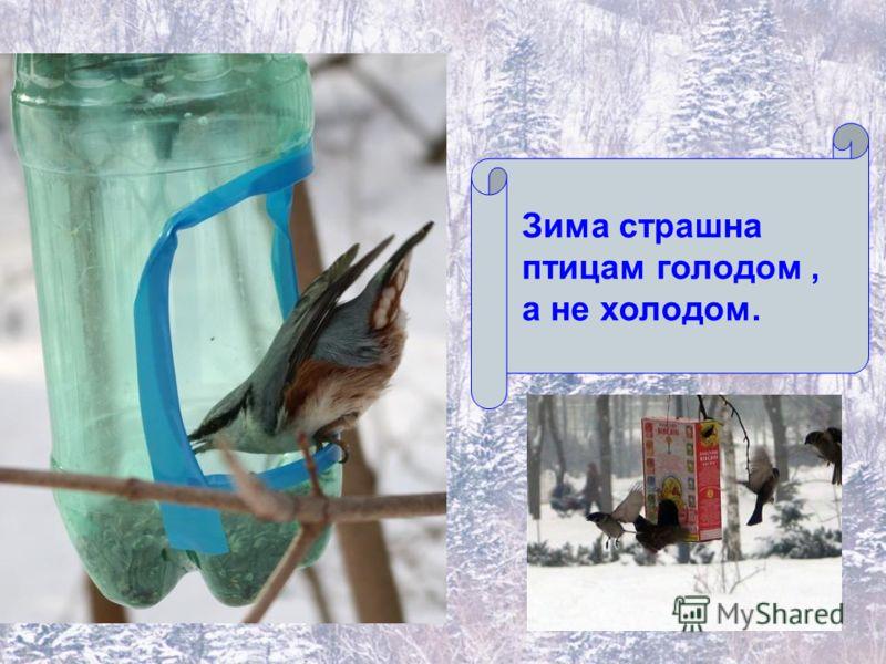 Зима страшна птицам голодом, а не холодом.