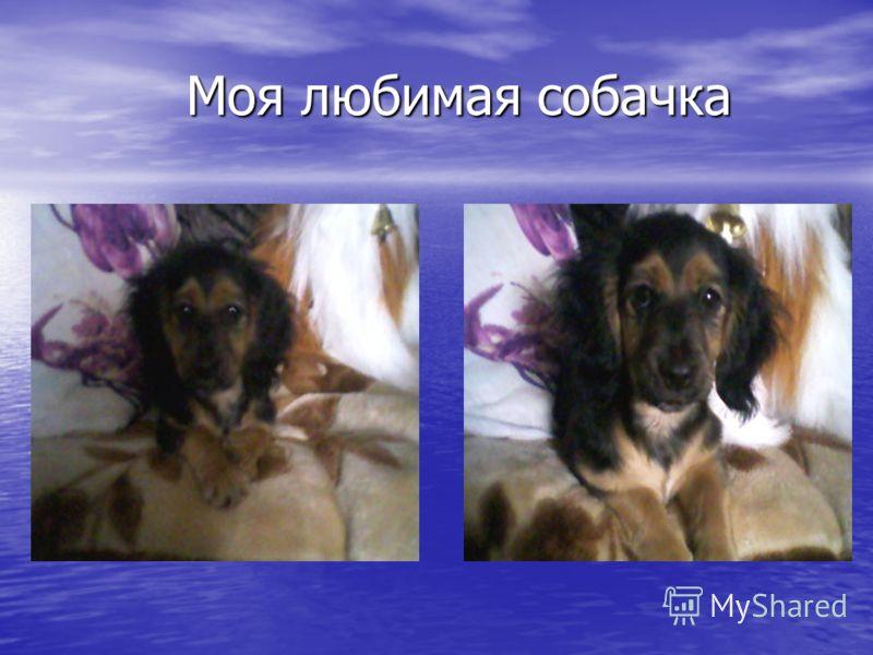 Моя любимая собачка Моя любимая собачка