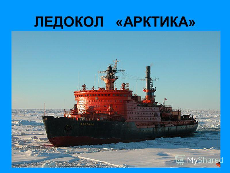 Красная Книга Овцебык