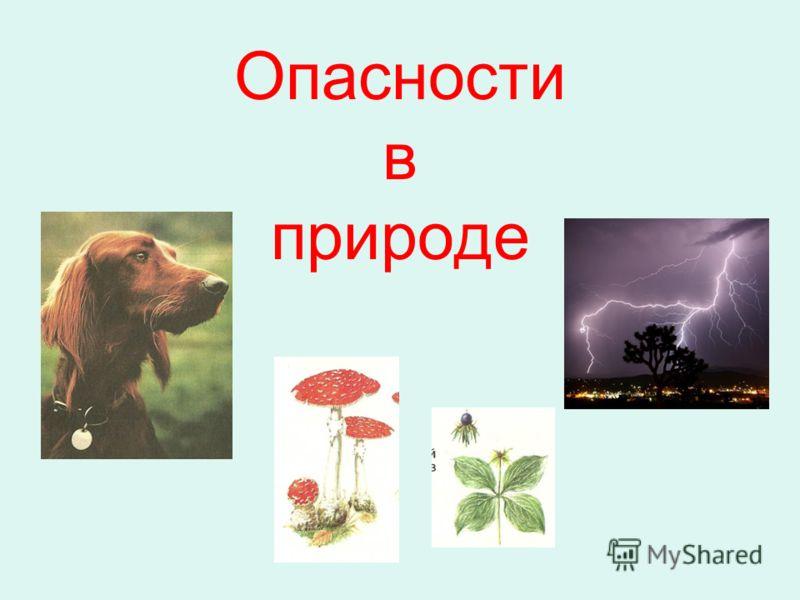 Опасности в природе