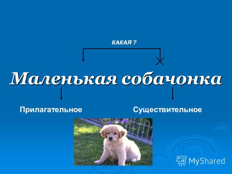Маленькая собачонка ПрилагательноеСуществительное КАКАЯ ?