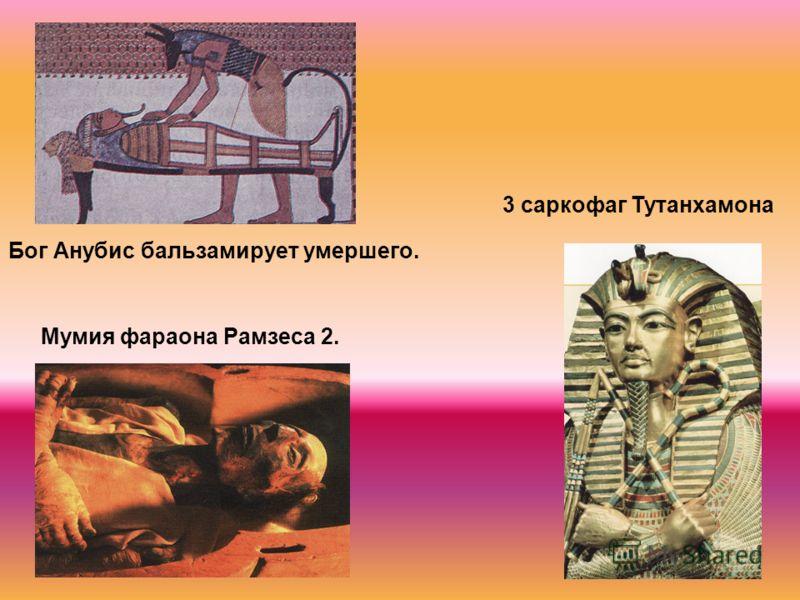 Бог Анубис бальзамирует умершего. Мумия фараона Рамзеса 2. 3 саркофаг Тутанхамона