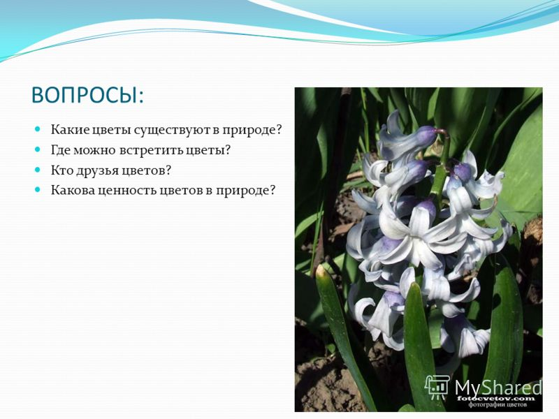 ВОПРОСЫ: Какие цветы существуют в природе? Где можно встретить цветы? Кто друзья цветов? Какова ценность цветов в природе?