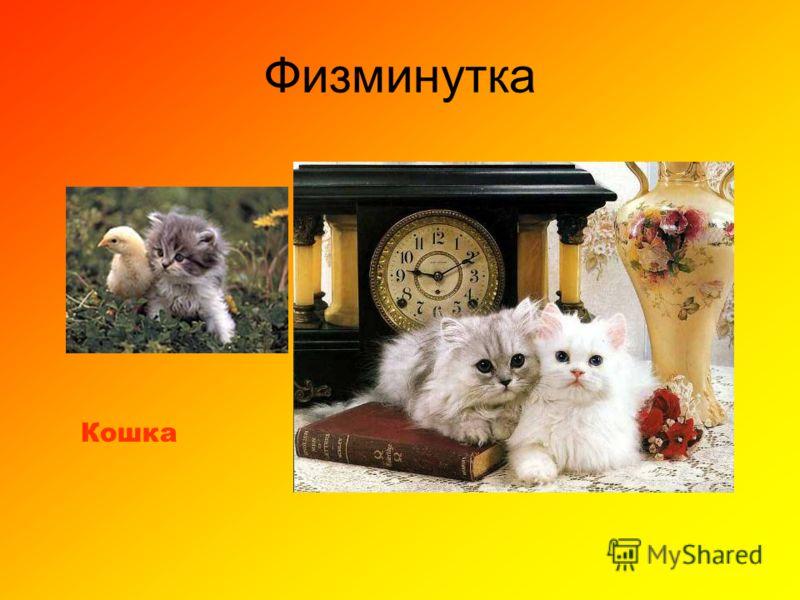 Физминутка Кошка