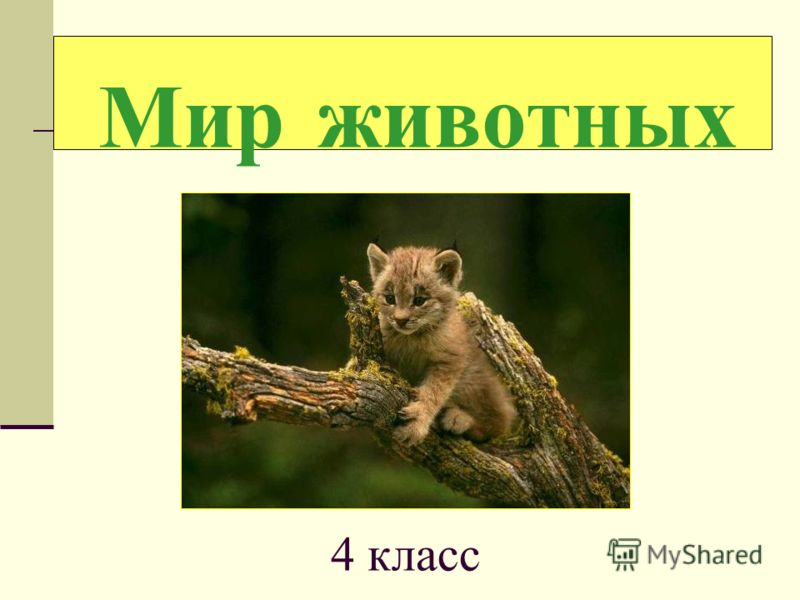 Мир животных 4 класс
