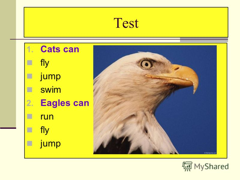 Test 1. Cats can fly jump swim 2. Eagles can run fly jump
