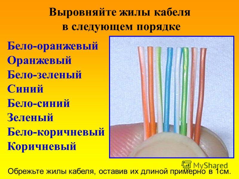 Выровняйте жилы кабеля в следующем порядке Бело-оранжевый Оранжевый Бело-зеленый Синий Бело-синий Зеленый Бело-коричневый Коричневый Обрежьте жилы кабеля, оставив их длиной примерно в 1см.