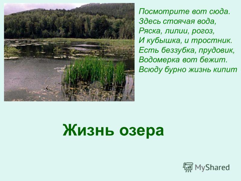 Посмотрите вот сюда. Здесь стоячая вода, Ряска, лилии, рогоз, И кубышка, и тростник. Есть беззубка, прудовик, Водомерка вот бежит. Всюду бурно жизнь кипит Жизнь озера