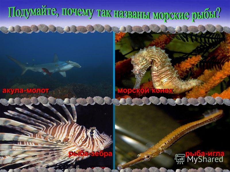 акула-молот морской конек рыба-зебра рыба-игла