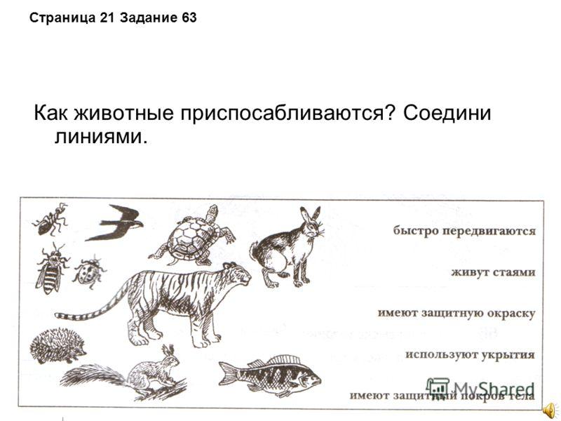 Страница 21 Задание 63 Как животные приспосабливаются? Соедини линиями.