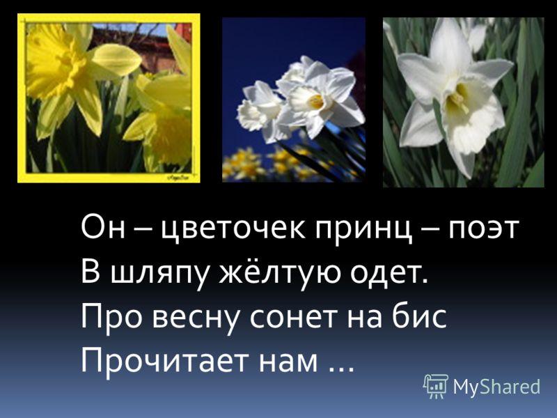 Он – цветочек принц – поэт В шляпу жёлтую одет. Про весну сонет на бис Прочитает нам …