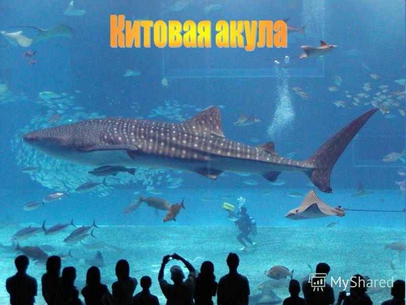 Типы рыб: