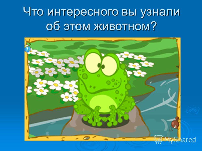 Земноводные (лягушки, жабы, тритоны и саламандры) - это особенные животные. (лягушки, жабы, тритоны и саламандры) - это особенные животные. Они умеют жить и в воде, и на суше. У земноводных гладкая тонкая кожа, и температура тела земноводных зависит