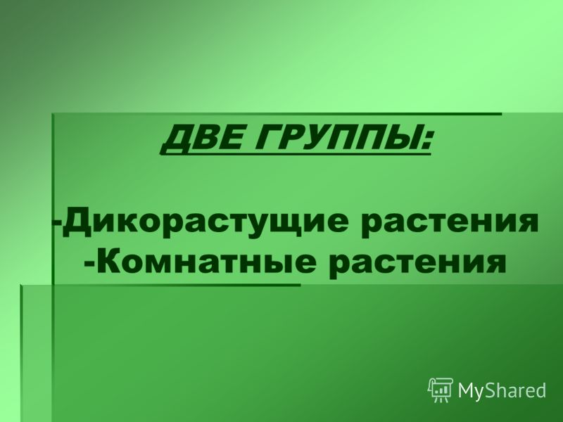 ДВЕ ГРУППЫ: -Дикорастущие растения -Комнатные растения