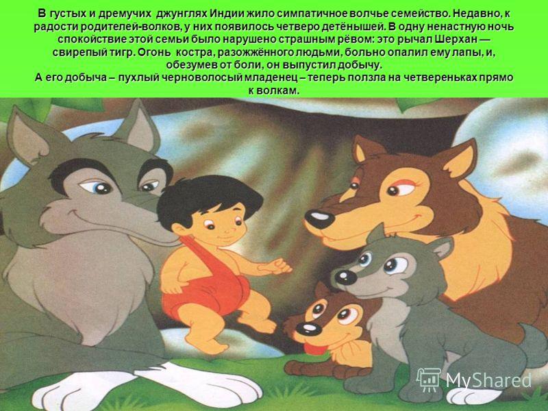 В густых и дремучих джунглях Индии жило симпатичное волчье семейство. Недавно, к радости родителей-волков, у них появилось четверо детёнышей. В одну ненастную ночь спокойствие этой семьи было нарушено страшным рёвом: это рычал Шерхан свирепый тигр. О
