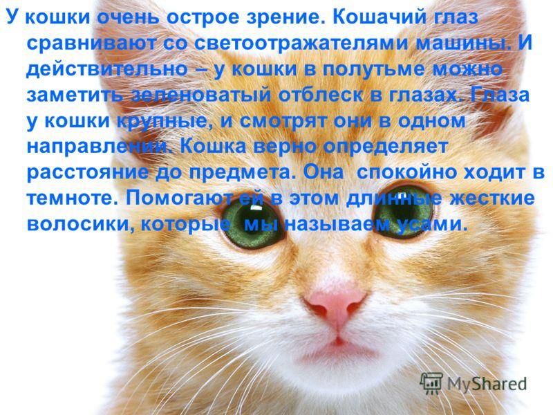 У кошки очень острое зрение. Кошачий глаз сравнивают со светоотражателями машины. И действительно – у кошки в полутьме можно заметить зеленоватый отблеск в глазах. Глаза у кошки крупные, и смотрят они в одном направлении. Кошка верно определяет расст