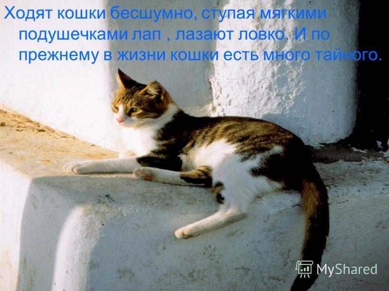 Ходят кошки бесшумно, ступая мягкими подушечками лап, лазают ловко. И по прежнему в жизни кошки есть много тайного.