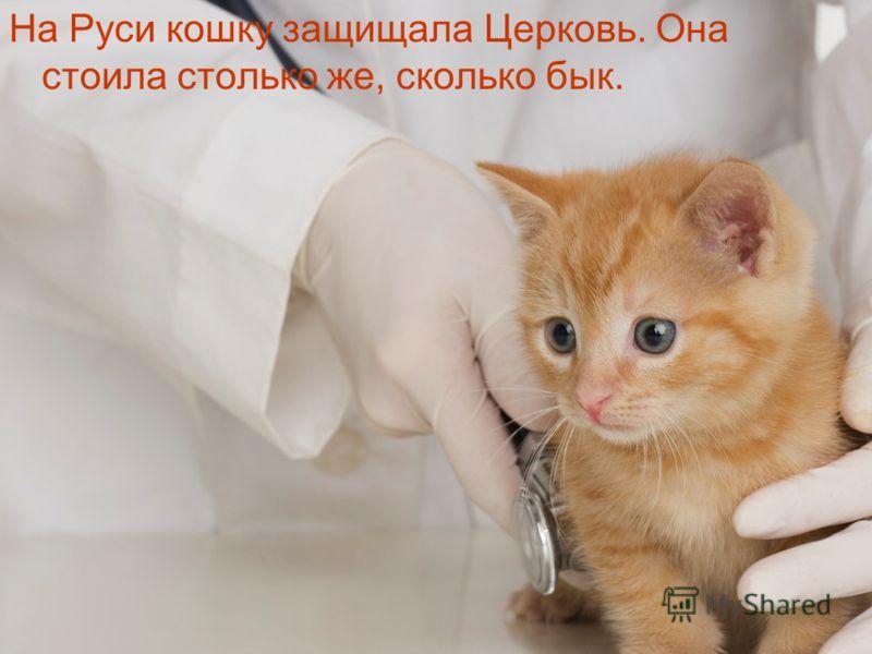 На Руси кошку защищала Церковь. Она стоила столько же, сколько бык.