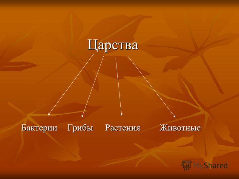 Царства Царства Бактерии Грибы Растения Животные Бактерии Грибы Растения Животные