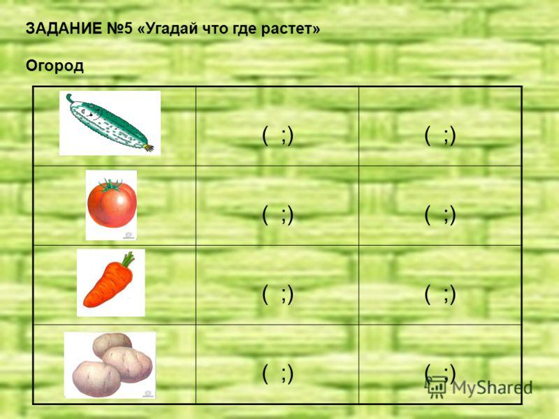 ЗАДАНИЕ 5 «Угадай что где растет» Огород ( ;)