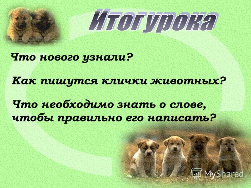 Что нового узнали? Как пишутся клички животных? Что необходимо знать о слове, чтобы правильно его написать?