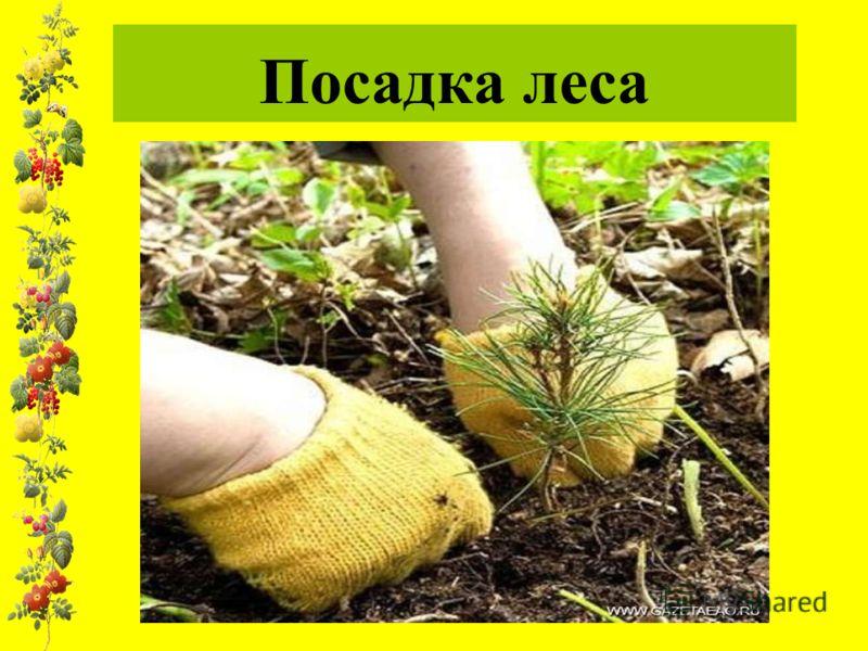 Посадка леса