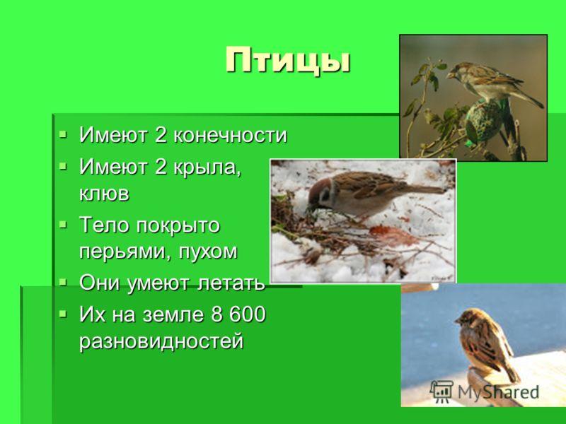 Птицы Имеют 2 конечности Имеют 2 конечности Имеют 2 крыла, клюв Имеют 2 крыла, клюв Тело покрыто перьями, пухом Тело покрыто перьями, пухом Они умеют летать Они умеют летать Их на земле 8 600 разновидностей Их на земле 8 600 разновидностей